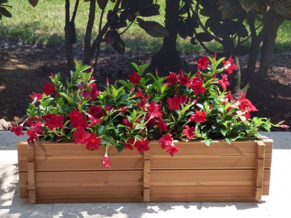 Marigold2 Planter Box